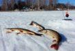 Ловля щуки на жерлицы по первому льду. Видео