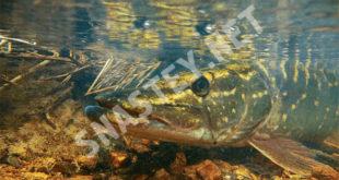 Приманки для зимней ловли или как гарантировать себе улов